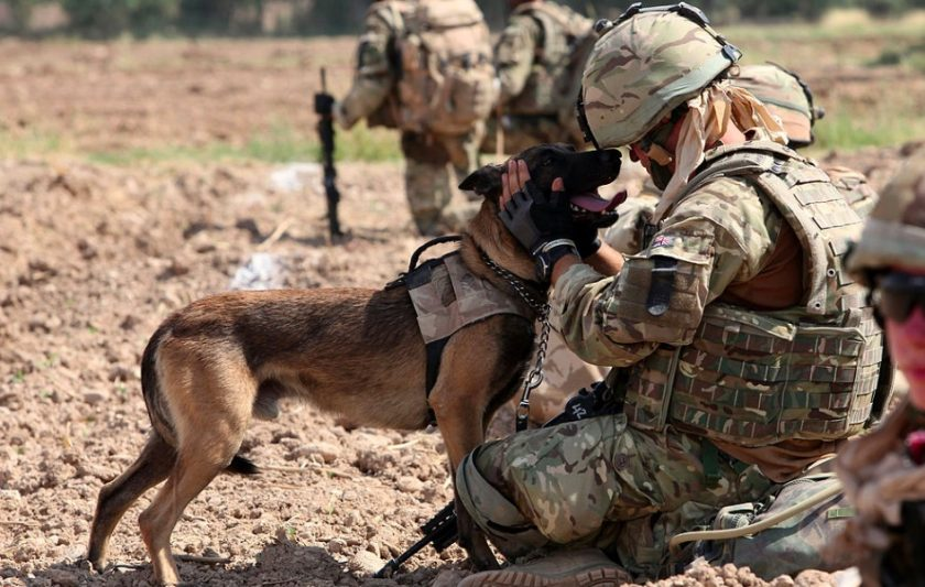 War Dogs Unconditional Love Proves They're Truly Man's Best Friend